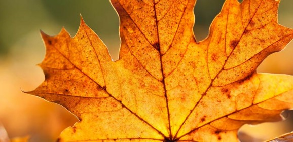 Autumn Car Care tips