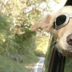 Tips for Travelling with pets #WorldAnimalDay